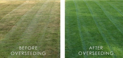 Lawn Care Blog Terra Lawn Care Specialists
