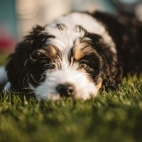 dog-pet-canine-black-and-white