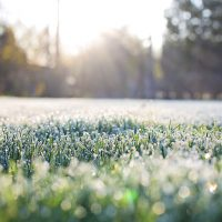 frost-on-grass-early-morning-frost-morning-preview