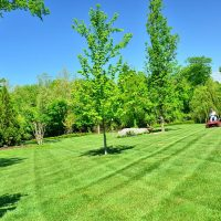 lawn-care-lawn-maintenance-lawn-services-grass-cutting-lawn-mowing
