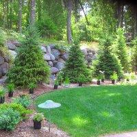 Tree and Shrub Care 2