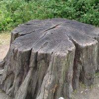 Tree_stump1_30u06