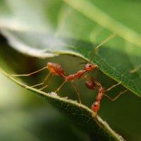 ant-pest-control-600